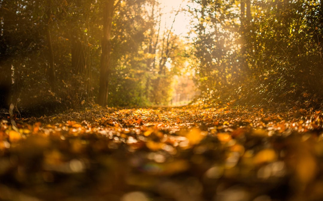 Transition to Fall With Awareness and Balance